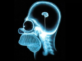 homer-simpson-brain