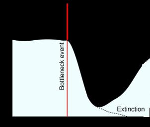 population_bottleneck.png