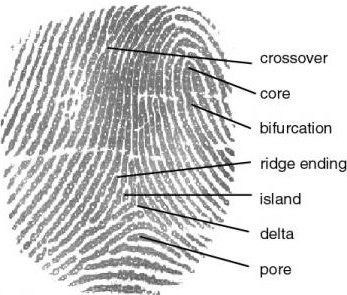 "fingerprint bloodstain pattern analysis and bite His conviction rested largely on ""bloodstain-pattern analysis"" — a technique   the cigarette butt found on his kitchen floor and unidentified fingerprints,   including the analysis of blood spatter, hairs, bite marks, shoe and tire."