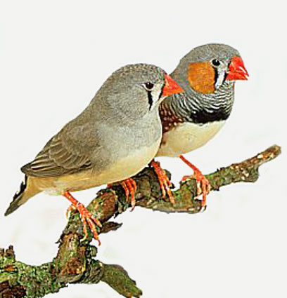 Read more here and listen to an intelligent finches song by clicking here.