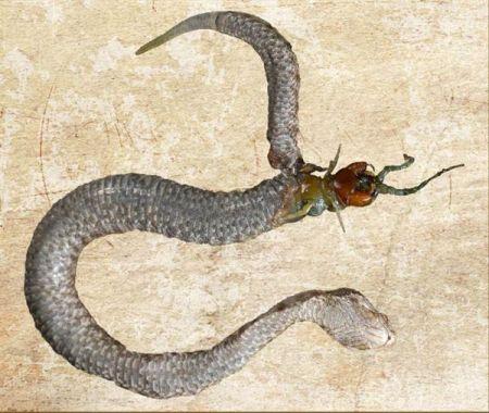 Centipede Eats Snake