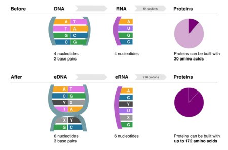 6 DNA Letters